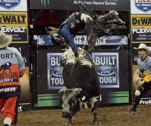 Madison Square Garden hosts Professional Bull Riders Monster Energy Buck Off