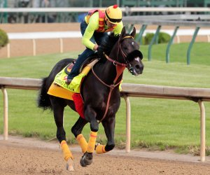 Previewing the 142nd running of the Kentucky Derby