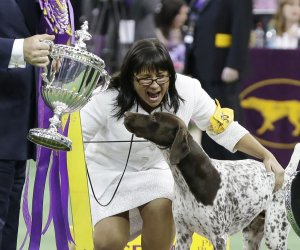 Westminster dog show winner crowned in newest category