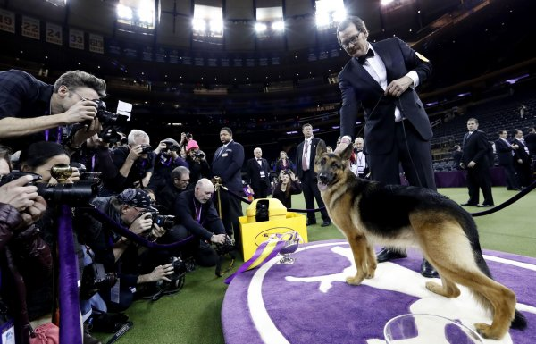 In Photos Westminster Kennel Club Dog Show In New York