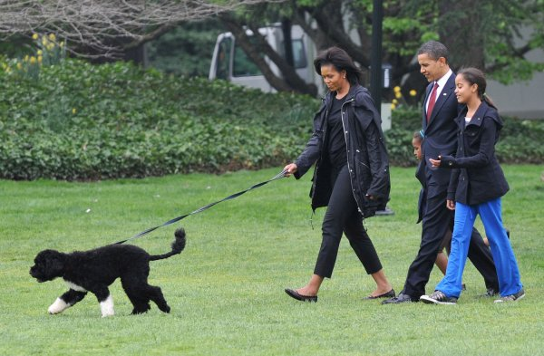 What Breed Is Obama S Dog