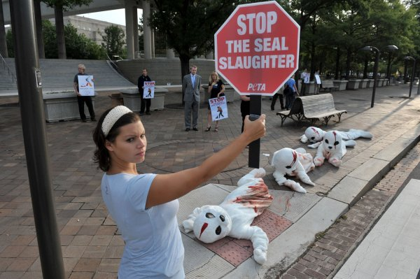 Image result for peta protest