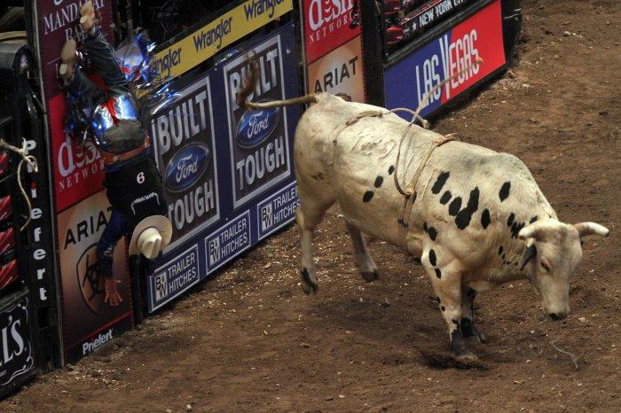 2010 professional bull riders championship - Bull riding madison square garden ...