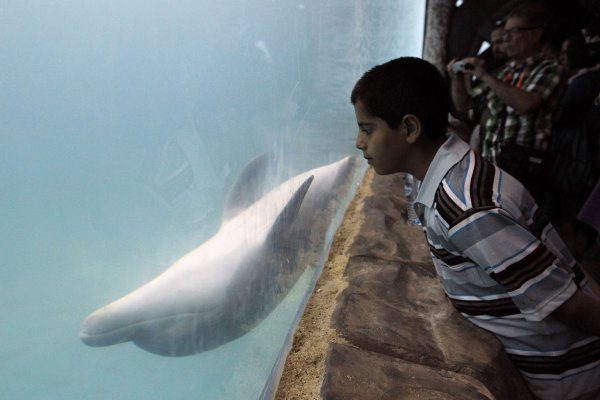 An Iranian boy looks at a dolphin swimming in an aquarium on Kish ...