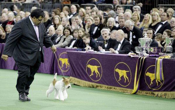 westminster dog show in new york