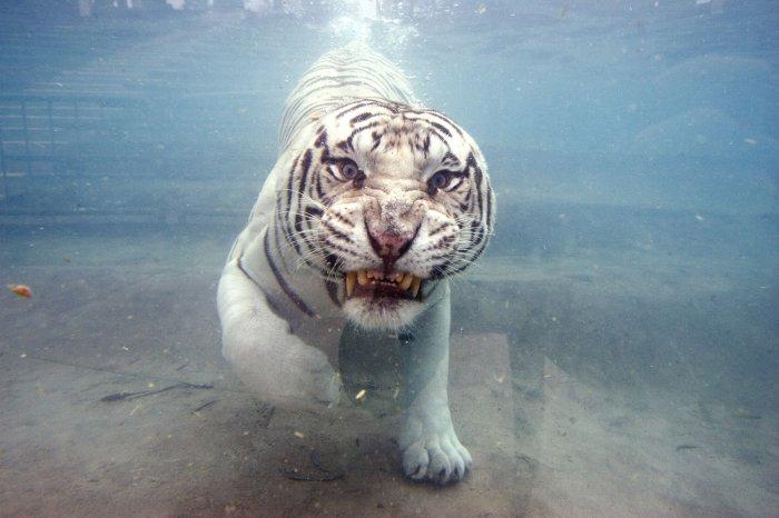 animals cool down at six flags slideshow upi com
