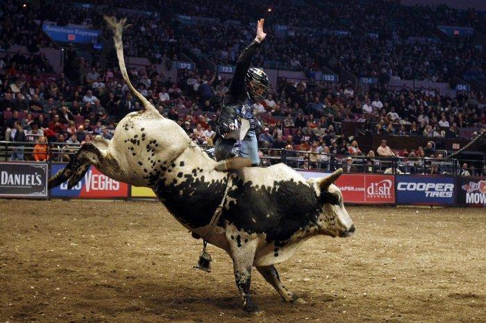2010 professional bull riders championship photos for Bull riding madison square garden