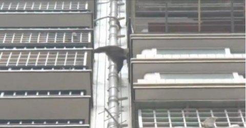 Mono misterioso captado en cámara escalando un edificio en China