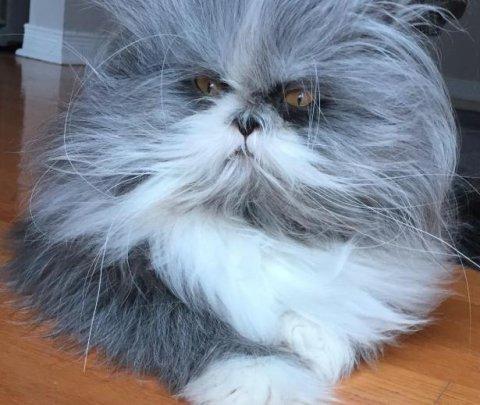 Gato que parece un perro confunde a las personas en Internet