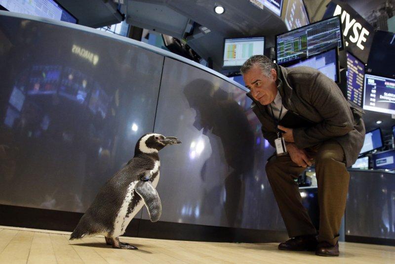 Un pingüino camina en el piso de la NYSE después de que SeaWorld Entertainment Inc. tocara la campana de cierre en la Bolsa de Nueva York el 15 de enero de 2014. Foto de archivo de John Angelillo / UPI