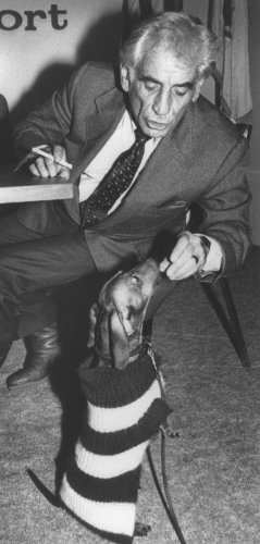 Leonard Bernstein treats his dog Henry to a piece of cheese