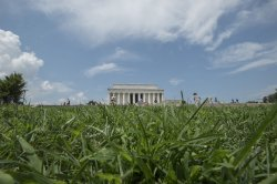 Grass Grows along the National Mall in Washington, DC