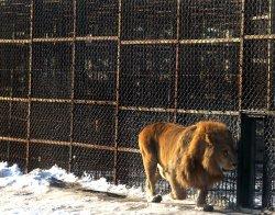 Siberian Tiger Park in Harbin