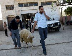 Palestinian Muslims Sacrifice Sheep On Eid Al-Adha, West Bank