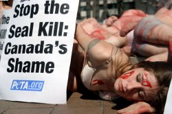 THE PETA PROTESTS CANADIAN SEAL HUNT