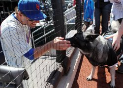 New York Mets Jeff Francoeur pets a dog on the field at Citi Field in New York