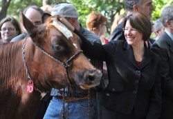 Sen. Amy Klobuchar (D-MN) pets a dairy cow at a dairy farming press conference in washington