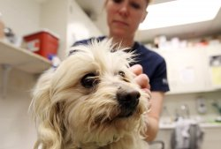 Dogs rescued by Humane Society of Missouri