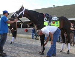 Horses prepare for the Kentucky Derby in Louisville, Kentucky