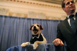 Pet Night on Capitol Hill in Washington