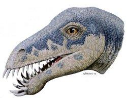 New dinosaur species