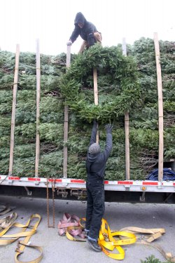 Christmas trees go on sale in St. Louis