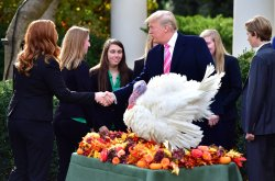 President Trump pardons Drumstick the National Thanksgiving Turkey at the White House