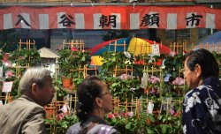 Morning Glory Fair in Tokyo