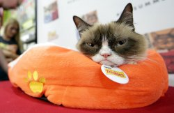 Grumpy Cat and Oskar the Blind Cat in New York