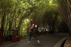 A Chinese tourist jumps for a photo under bamboo trees in Chengdu, China