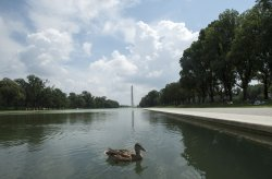 A duck enjoys a moment on the National Mall in Washington, DC