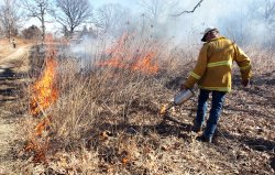 Brush fires being set in Forest Park