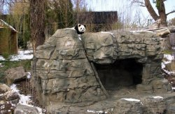 Giant Pandas at National Zoo