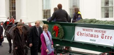 White House Christmas Tree arrives