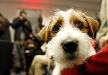 Westminster Dog Show new breeds. .