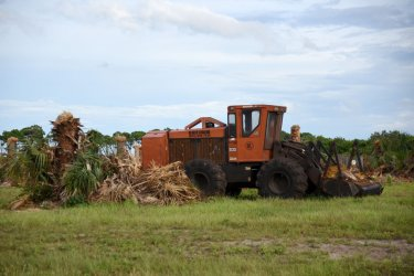 Trees being chopped down at the Space Center
