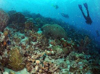 Reef in Bonaire weathers hurricane Omar