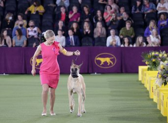 145th Annual Westminster Kennel Club Dog Show in New York