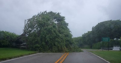 Down trees as Hurricane Irma comes on land in Florida
