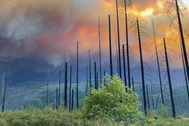 Historic Fires Devastate the Pacific Coast of the United States