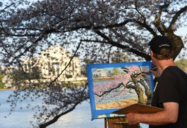 Cherry blossom trees at the Tidal Basin in Washington