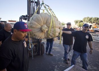 2058 pound pumpkin sets North American record at Half Moon Bay, California competition