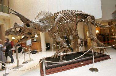 Dinosaure skeleton for sale at Christie's in Paris