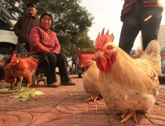 Chinese farmers hope to sell their chickens in Dengfeng