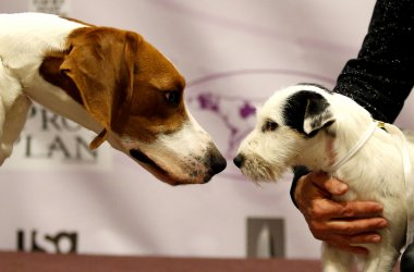 Westminster Dog Show new breeds. .