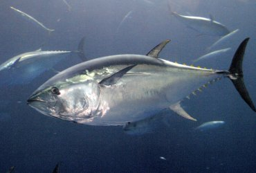 Tuna Research and Conservation Center