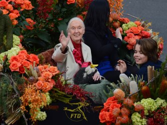 Grand Marshall Jane Goodall is seen during the 124th Tournament of Roses Parade in Pasadena, California