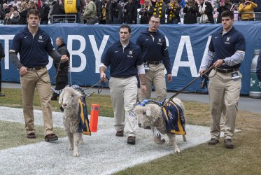 Navy midshipmen escorts team mascots during pregame ceremonies.
