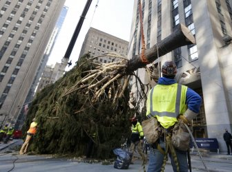 Rockefeller Center Christmas Tree Arrives at Rockefeller Plaza