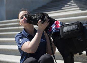 Service dog Lazer, with owner Amanda Damasiewicz take a photo following a news conference